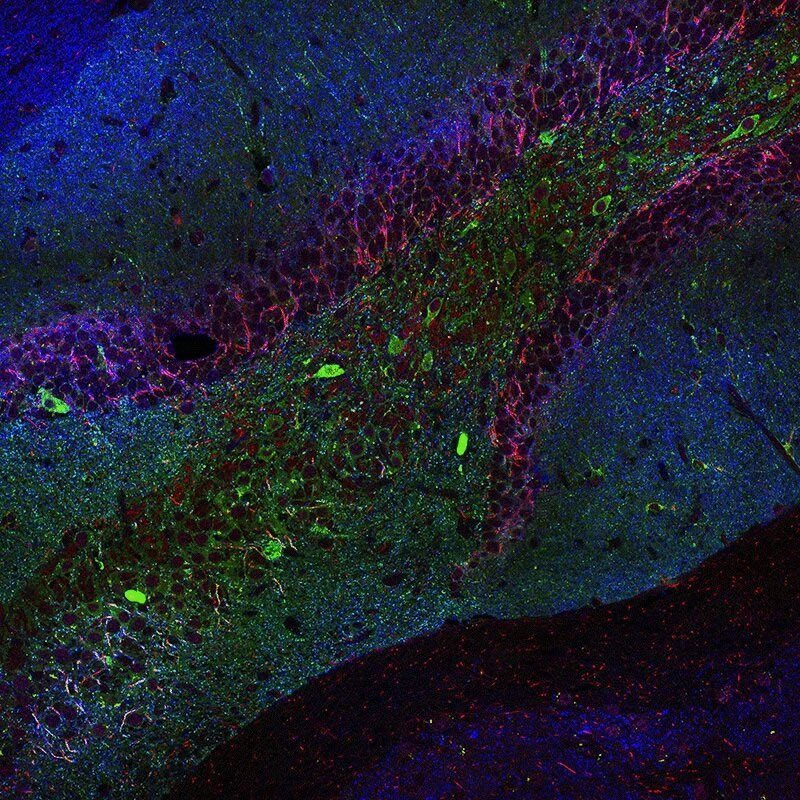 Shining new light on the actions of key neurotransmitter in the brain