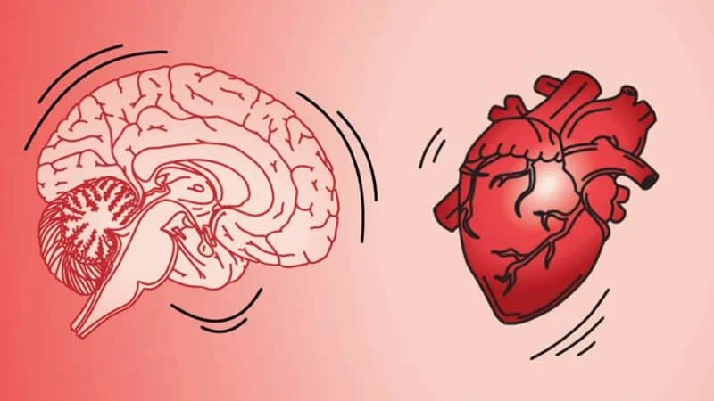 This shows a brain and a heart
