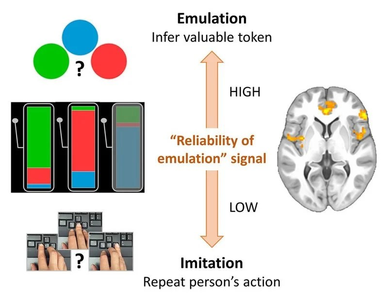 Watch and learn: How the brain gains knowledge through observation
