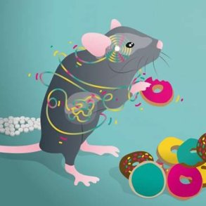 This shows a mouse eating a donut