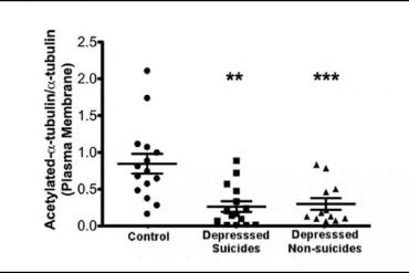 This is a graph from the study