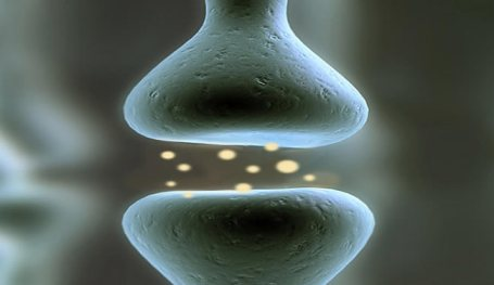 A graphic of a synapse is shown.