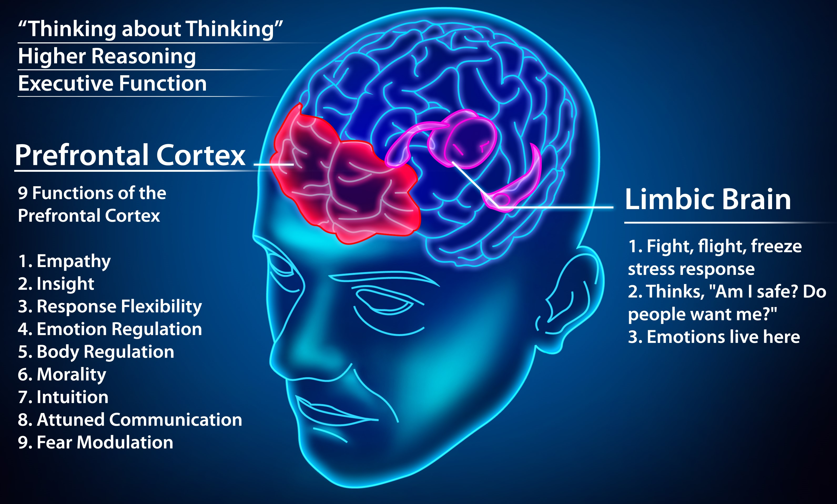 Frontal Lobe Brain Functions Diagram