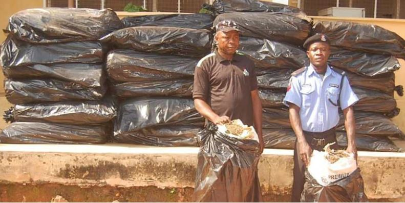 Drug peddlers disguising as police officers nabbed with 50 bags of cannabis in Edo