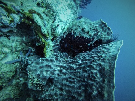 Can you spot the frogfish?