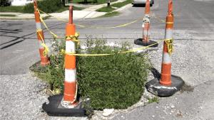 Lakeview pothole harbors life