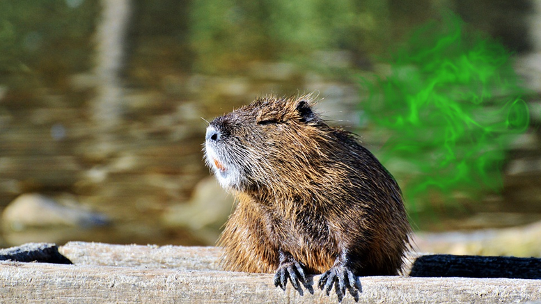 "Farting nutria convince Jefferson Parish to endorse ""Green New Deal"""