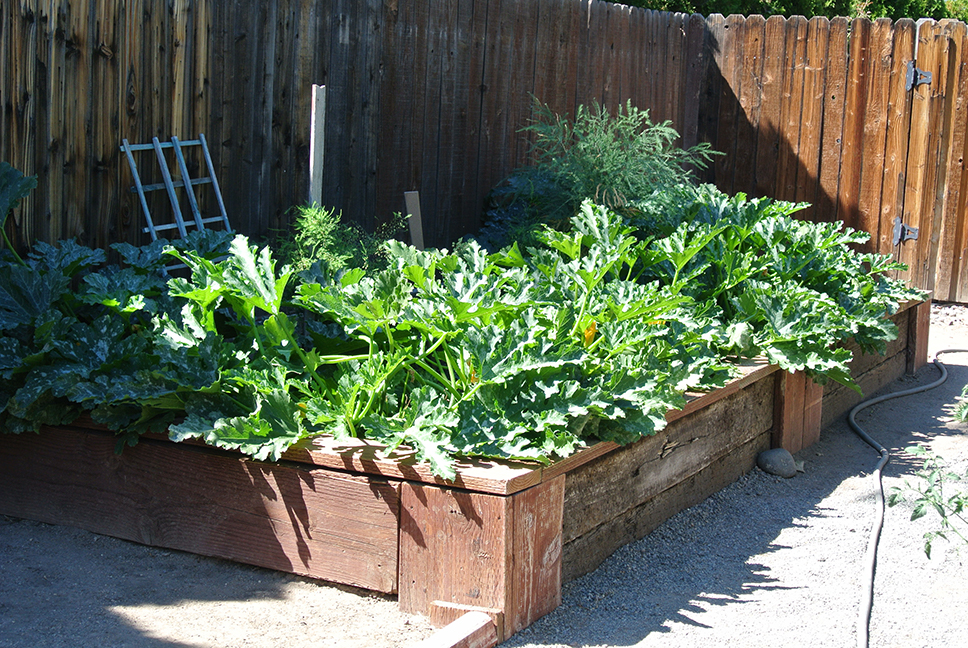 "University of Nevada, Reno Extension virtually presents ""Raised Bed Gardening,"" 6-7:30 p.m., April 7, as part of the online ""Grow Your Own, Nevada!"" series. Photo by Wendy Hanson Mazet, Extension."