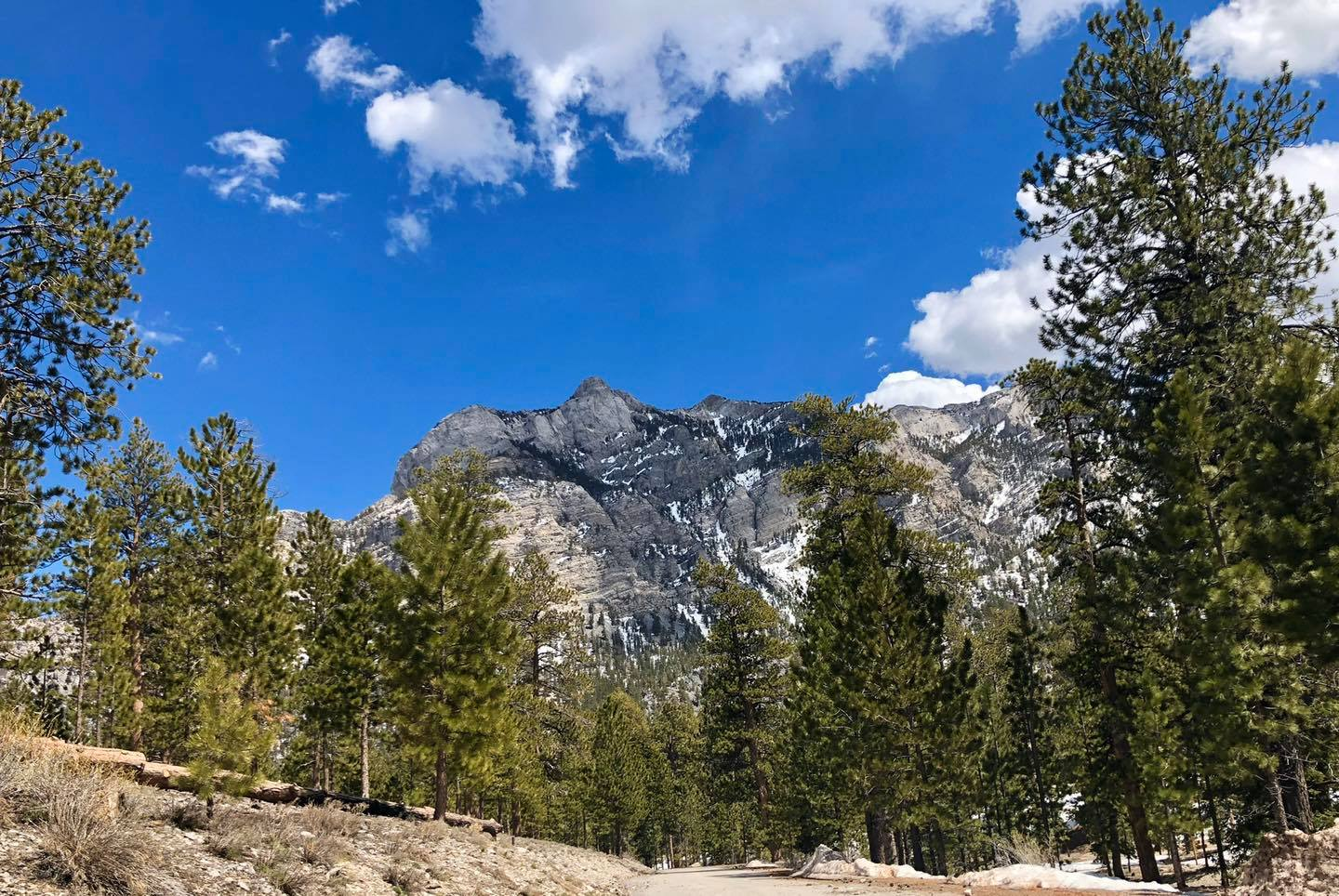 Spring Mountains National Recreation Area near Mt. Charleston.