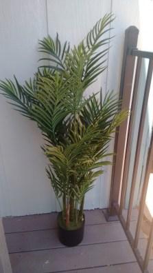Areca palm tree from Museum trees | neveralonemom.com