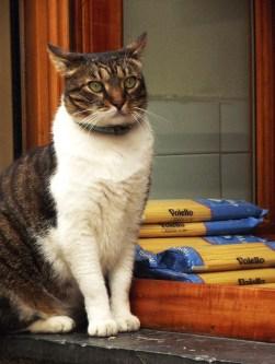 Pasta's thief cat