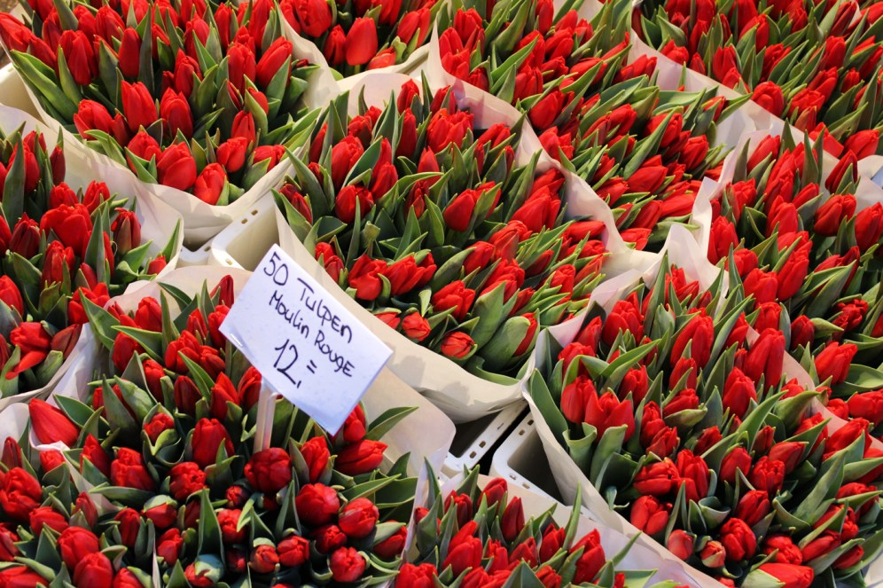 Tulips - Amsterdam 7
