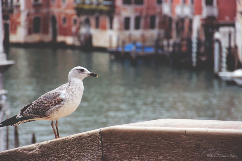 Venice: Here again (3)