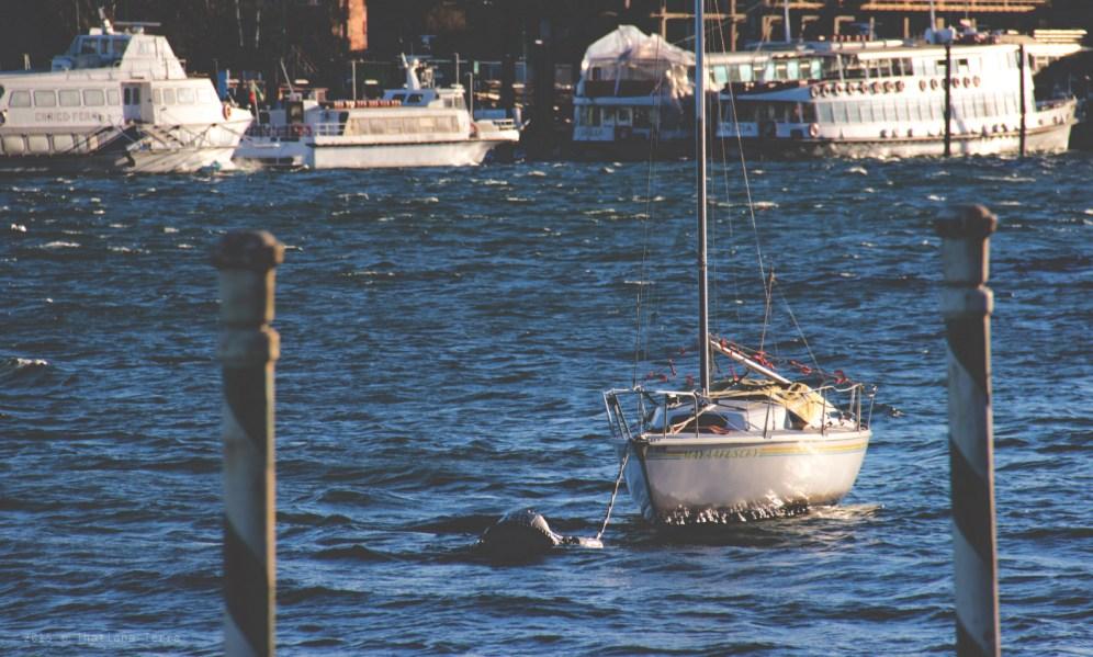 Arona: By the lake (3)