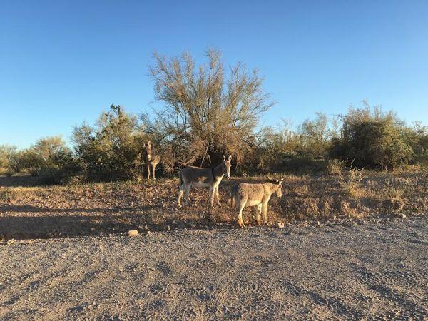 Phoenix-Arizona Free-Things to Do from NeverEndingJourneys.com