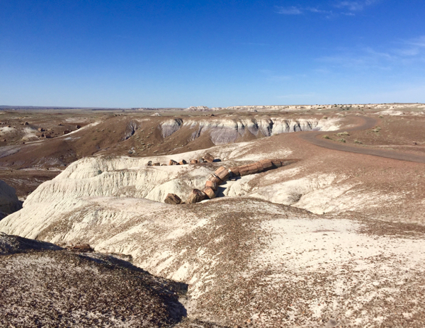 Petrified Forest Travel Guide Jasper Forest