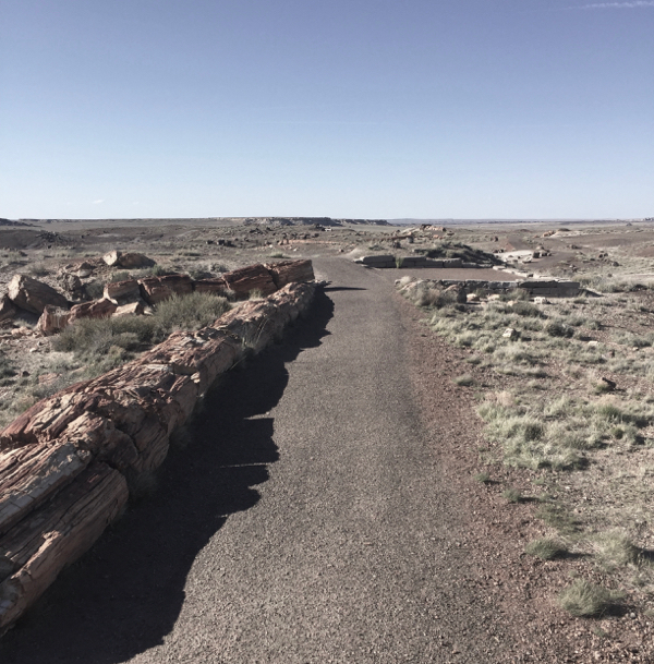 Petrified Forest Travel Guide Things to do