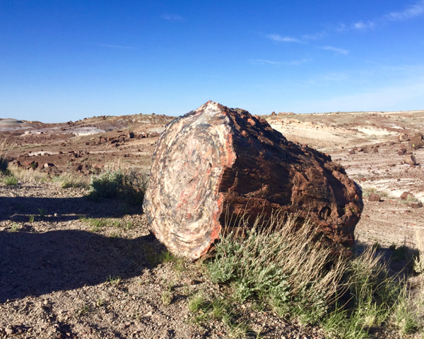 Best Petrified Forest Travel Guide