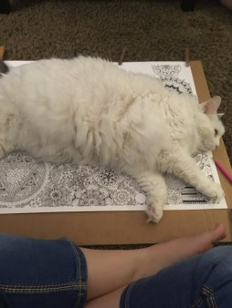 Cat approval! August 14, 2016