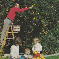 Postcard featuring orange picker and children