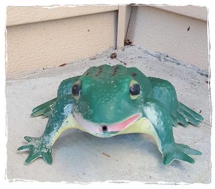 Alert frog croaks on doorstep