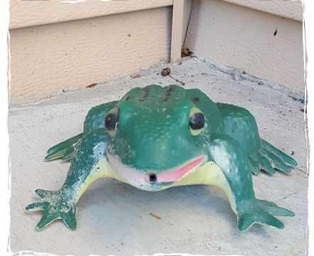 Alert frog croaks on doorstep