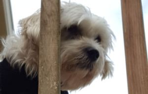 Dog on upper deck to better search for vermin