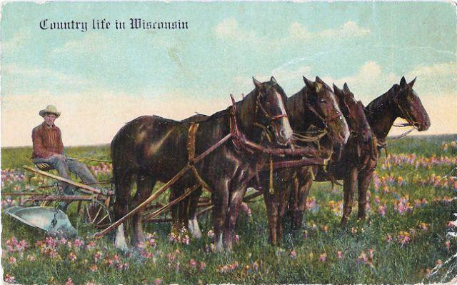 Postcard... Man resting on a plow in Wisconsin