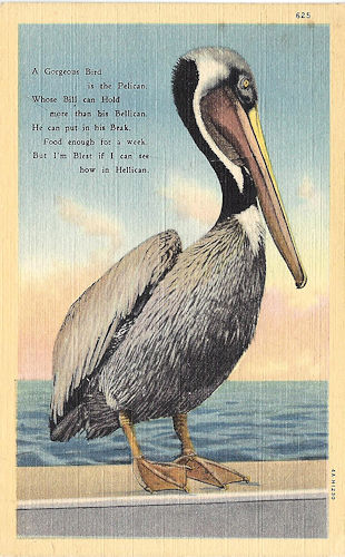 The story of the pelican postcard