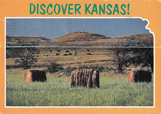 Kansas hay and cows postcard. What were you expecting?