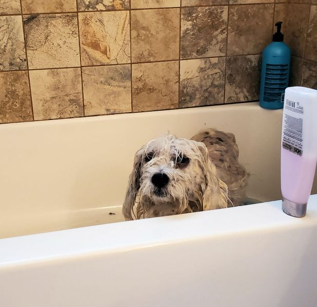A mongrel after a bath is still a mongrel, in this case especially so.