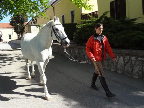 walking a horse