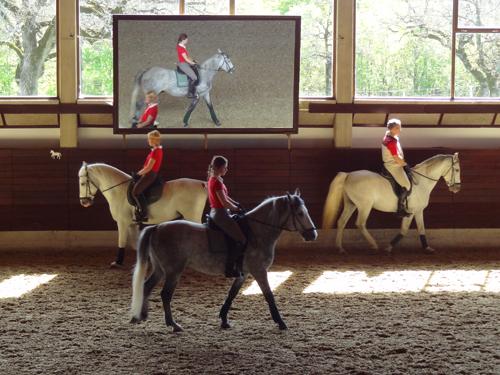 horses training