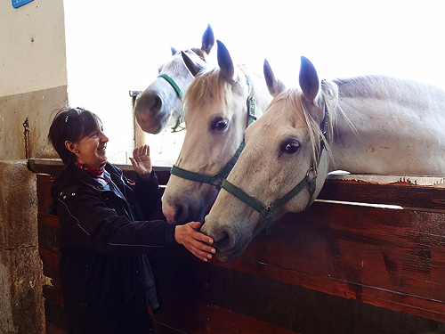 a woman with horse at the Lipica Stud farm