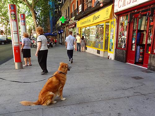 a dog sitting on the sidewalk