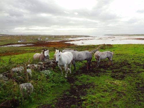 The Connemara landscape - Connemara Country Lodge