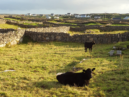 The vewi from my B&B on the Aran Islands, Ireland