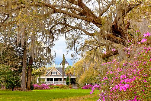 Magnolia Plantation and Gardens / photo: Susan Cole Kelly