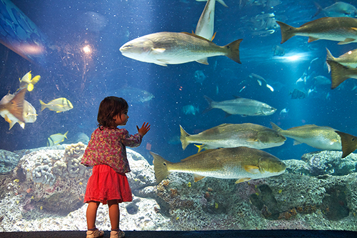 South Carolina Aquarium / photo: Harry Alverson