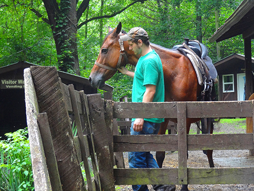 man with a horse seen on a Smoky Mountains road trip