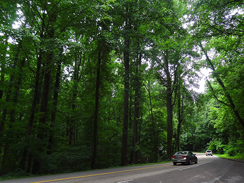 cars in a forest seen on a Smoky Mountains road trip