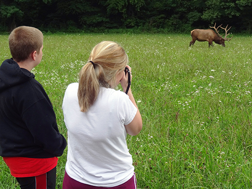 Photographing grazing elk seen on a Smoky Mountains road trip