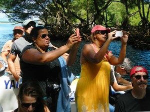 Eco-tourists in Samana mangroves in Dominican Republic