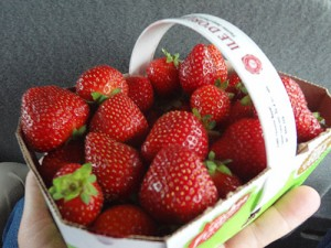 strawberries in a basket in Ile d'Orleans