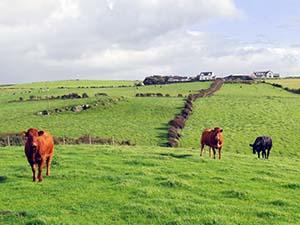 Pasture along Northern Ireland's Coast Road