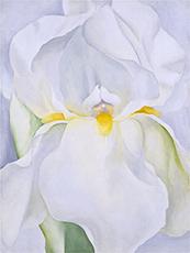 White Iris No. 7 in New Mexico / photo: Museo Thyssen-Bornemisza