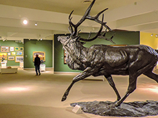 Scuplpture of an elk at the Whitney Western Art Museum in Cody among my memorable travel experiences