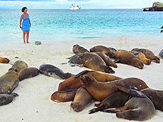 Sea lions on beach