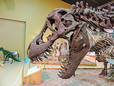 The Wyoming Dinosaur Center among my memorable travel experiences