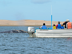 people in boat watching a whale in Galapagos